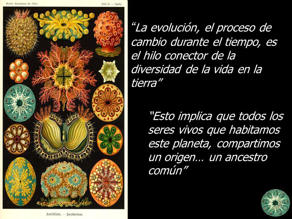 La evolución, el proceso de cambio durante el tiempo, es el hilo conector de la diversidad de la vida en la tierra Esto implica que todos los seres vi