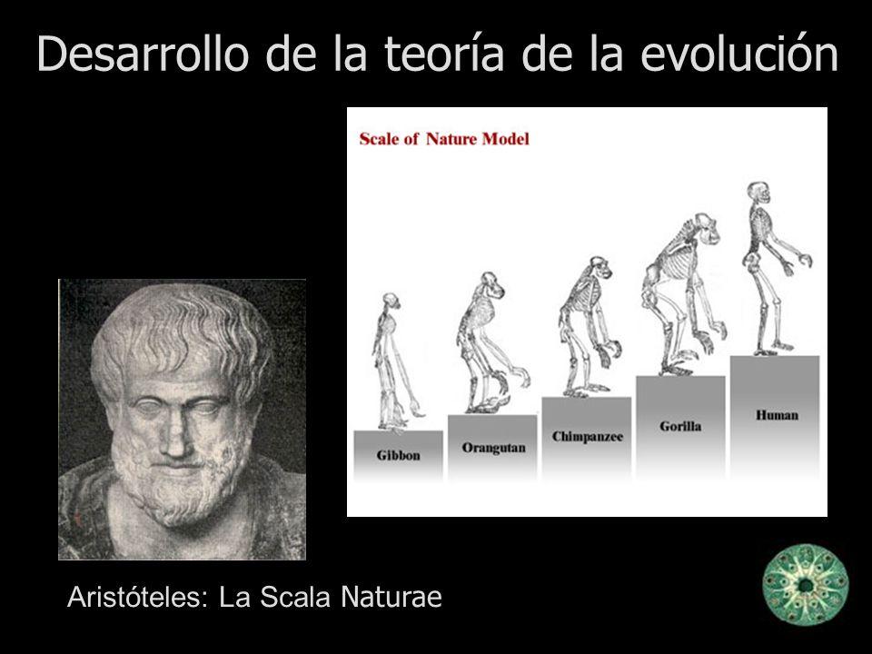 Desarrollo de la teoría de la evolución Aristóteles: La Scala Naturae