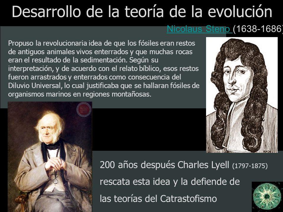 Desarrollo de la teoría de la evolución Nicolaus Steno Nicolaus Steno (1638-1686) Propuso la revolucionaria idea de que los fósiles eran restos de ant