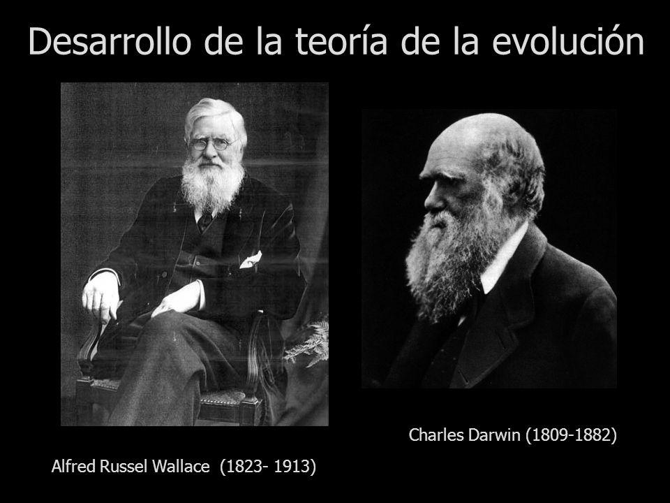 Desarrollo de la teoría de la evolución Alfred Russel Wallace (1823- 1913) Charles Darwin (1809-1882)