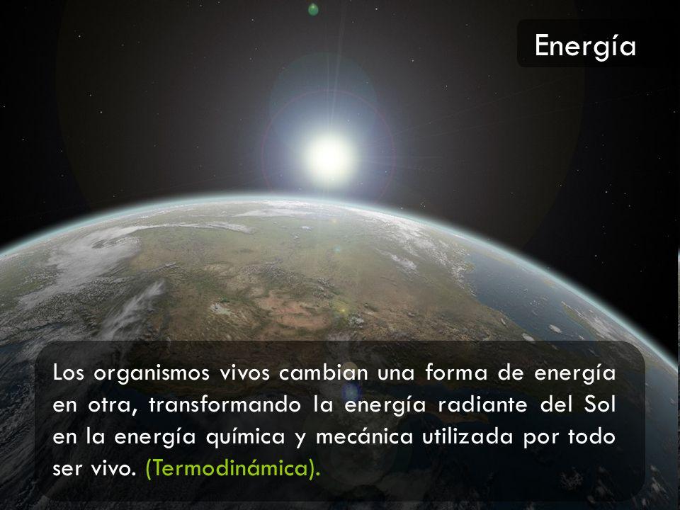 Los organismos vivos cambian una forma de energía en otra, transformando la energía radiante del Sol en la energía química y mecánica utilizada por to