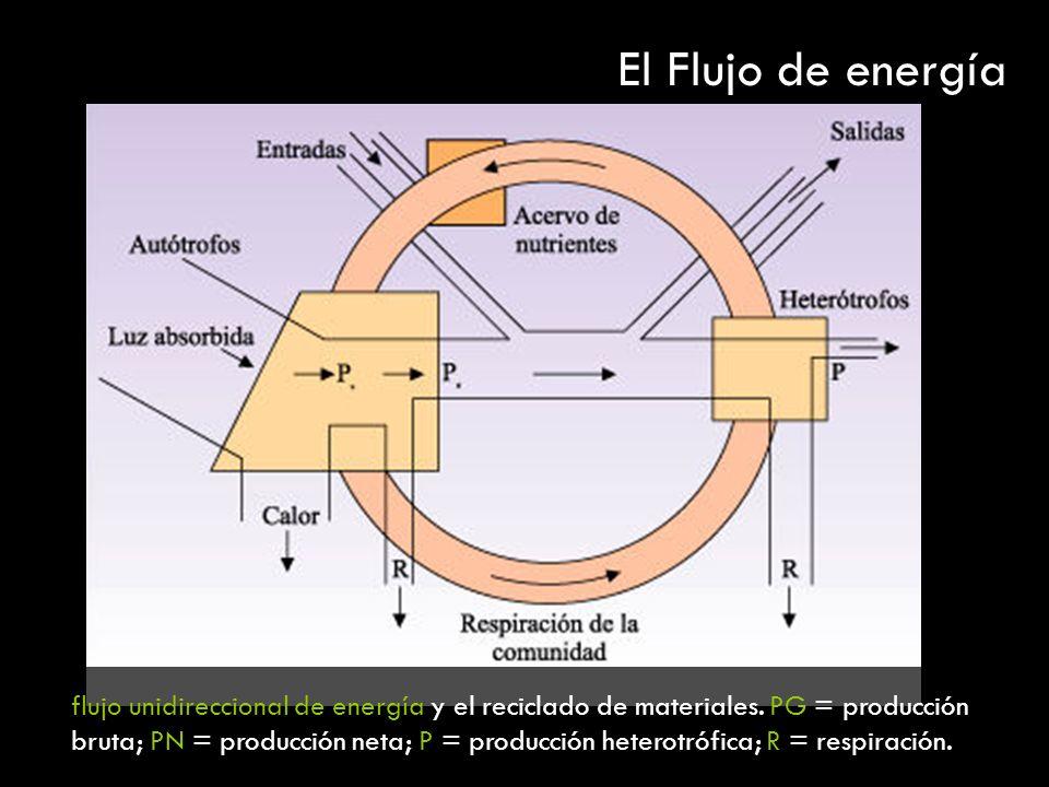flujo unidireccional de energía y el reciclado de materiales. PG = producción bruta; PN = producción neta; P = producción heterotrófica; R = respiraci