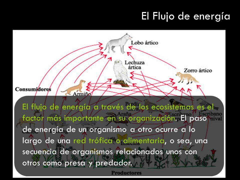 El flujo de energía a través de los ecosistemas es el factor más importante en su organización. El paso de energía de un organismo a otro ocurre a lo