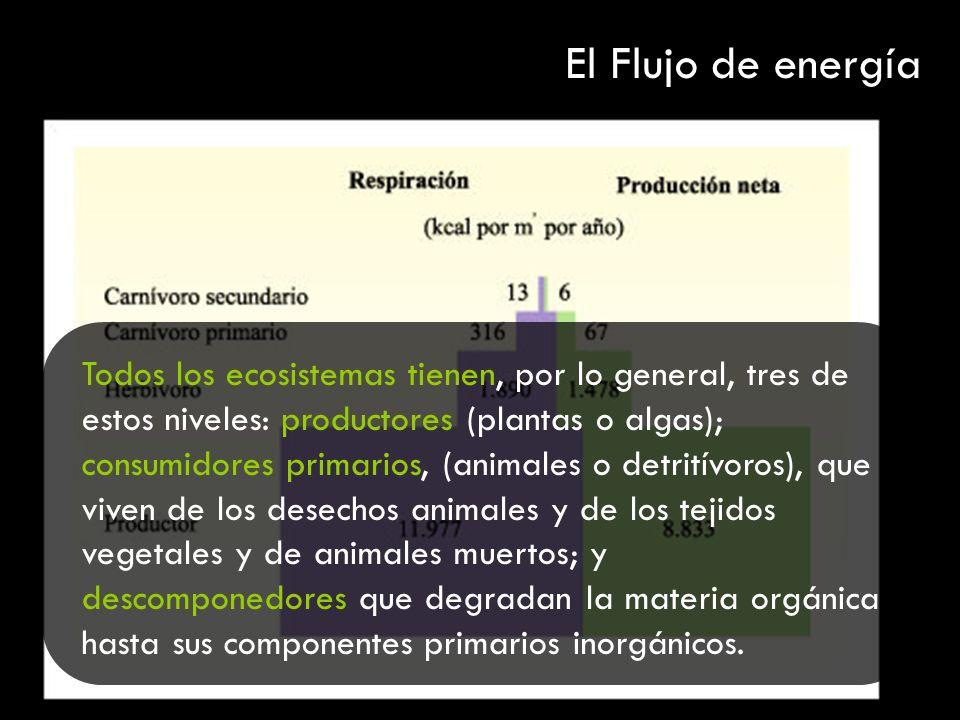 Todos los ecosistemas tienen, por lo general, tres de estos niveles: productores (plantas o algas); consumidores primarios, (animales o detritívoros),