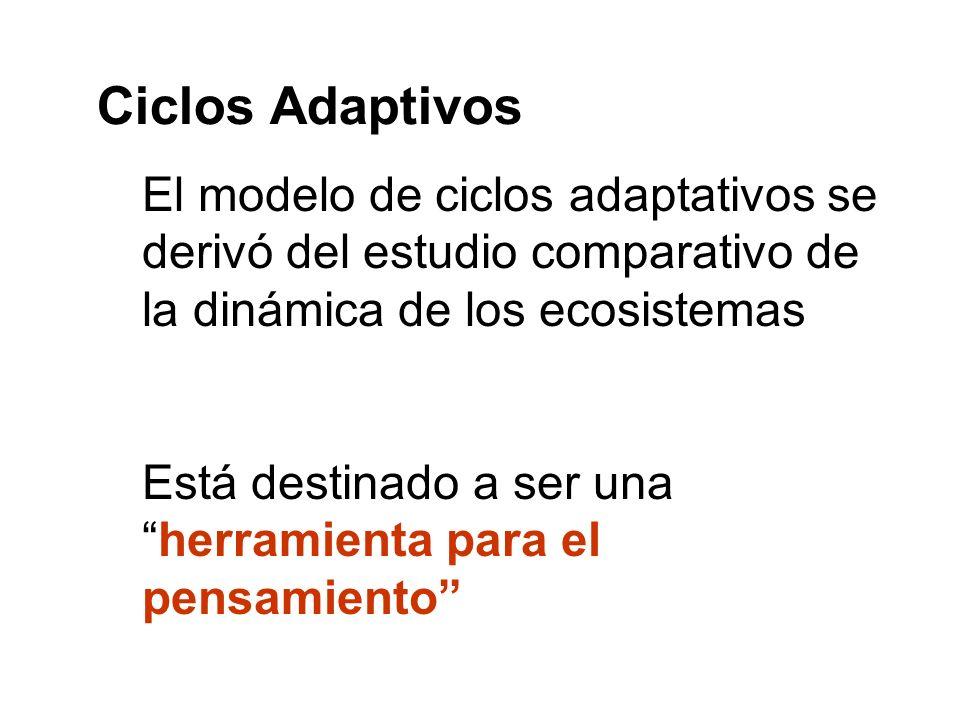 El modelo de ciclos adaptativos se derivó del estudio comparativo de la dinámica de los ecosistemas Está destinado a ser unaherramienta para el pensam