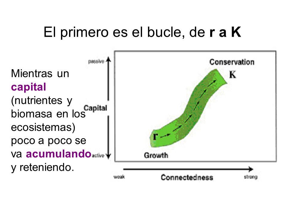 El primero es el bucle, de r a K Mientras un capital (nutrientes y biomasa en los ecosistemas) poco a poco se va acumulando y reteniendo.