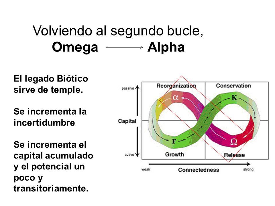 Volviendo al segundo bucle, Omega Alpha El legado Biótico sirve de temple. Se incrementa la incertidumbre Se incrementa el capital acumulado y el pote
