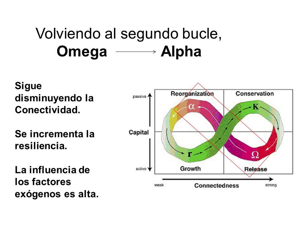 Volviendo al segundo bucle, Omega Alpha Sigue disminuyendo la Conectividad. Se incrementa la resiliencia. La influencia de los factores exógenos es al