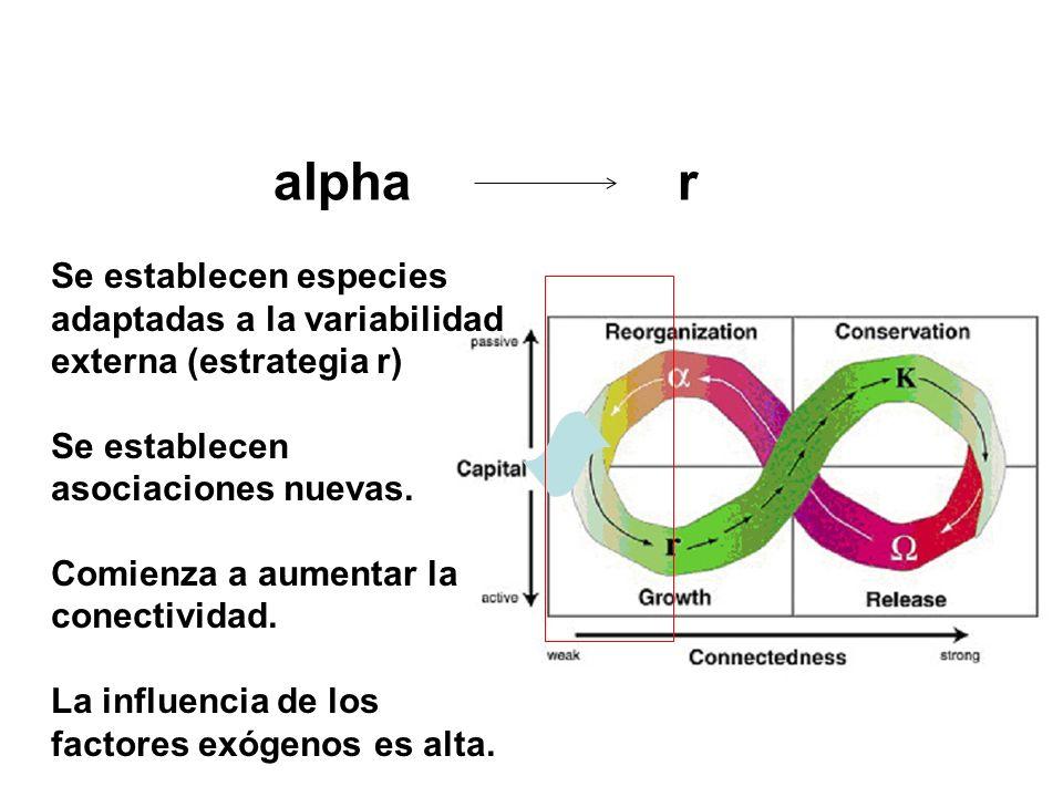 alpha r Se establecen especies adaptadas a la variabilidad externa (estrategia r) Se establecen asociaciones nuevas. Comienza a aumentar la conectivid