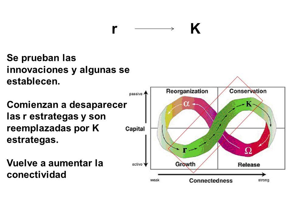 r K Se prueban las innovaciones y algunas se establecen. Comienzan a desaparecer las r estrategas y son reemplazadas por K estrategas. Vuelve a aument