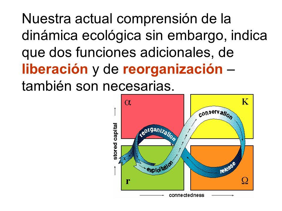 Nuestra actual comprensión de la dinámica ecológica sin embargo, indica que dos funciones adicionales, de liberación y de reorganización – también son