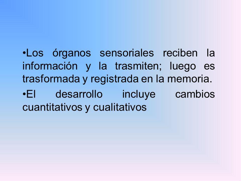 Los órganos sensoriales reciben la información y la trasmiten; luego es trasformada y registrada en la memoria. El desarrollo incluye cambios cuantita