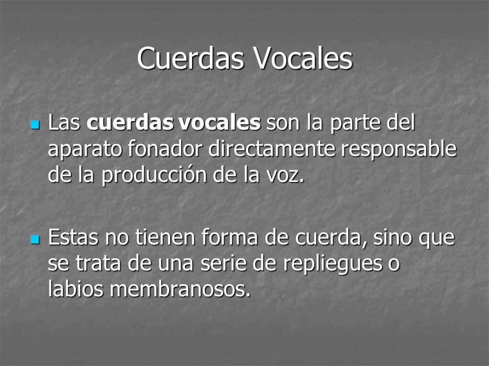 Cuerdas Vocales Las cuerdas vocales son la parte del aparato fonador directamente responsable de la producción de la voz. Las cuerdas vocales son la p