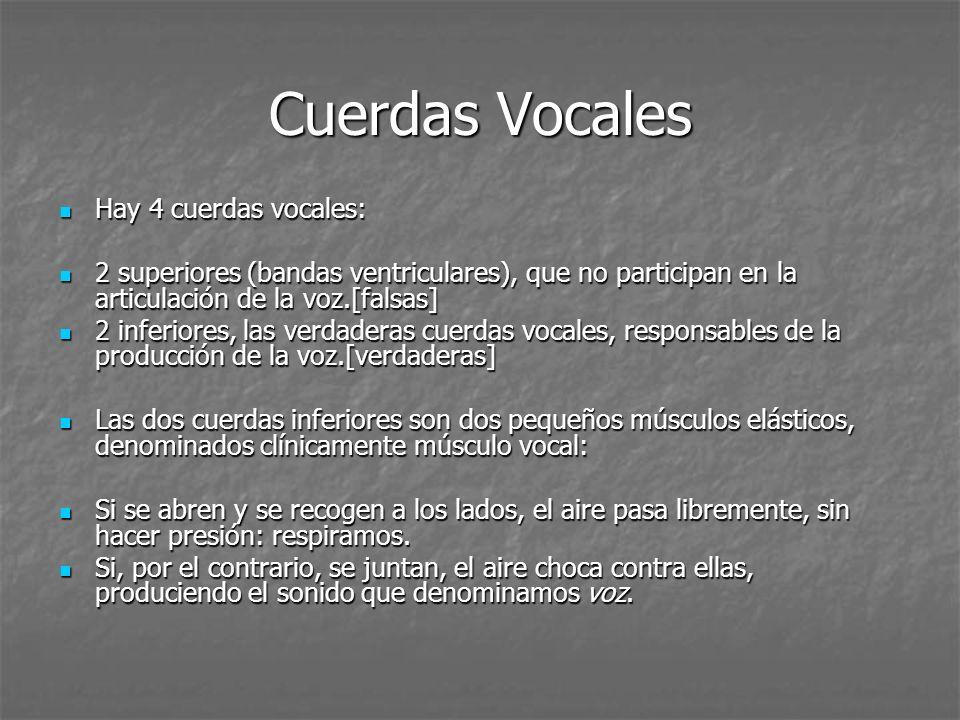 Cuerdas Vocales Hay 4 cuerdas vocales: Hay 4 cuerdas vocales: 2 superiores (bandas ventriculares), que no participan en la articulación de la voz.[fal