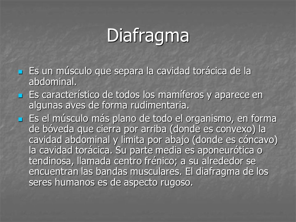 Diafragma Es un músculo que separa la cavidad torácica de la abdominal. Es un músculo que separa la cavidad torácica de la abdominal. Es característic