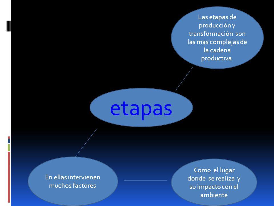 Cadenas productivas Etapas del proceso productivo El proceso productivo producción transformación distribución comercialización consumo