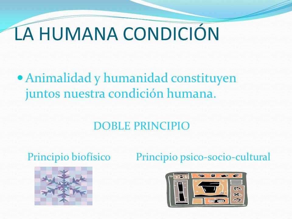 LA HUMANA CONDICIÓN Animalidad y humanidad constituyen juntos nuestra condición humana. DOBLE PRINCIPIO Principio biofísico Principio psico-socio-cult
