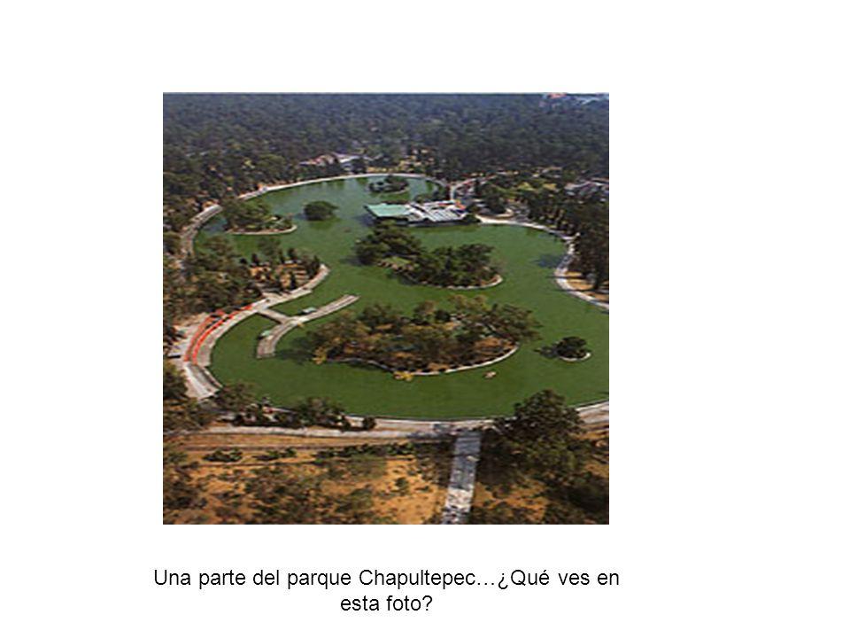 Una parte del parque Chapultepec…¿Qué ves en esta foto