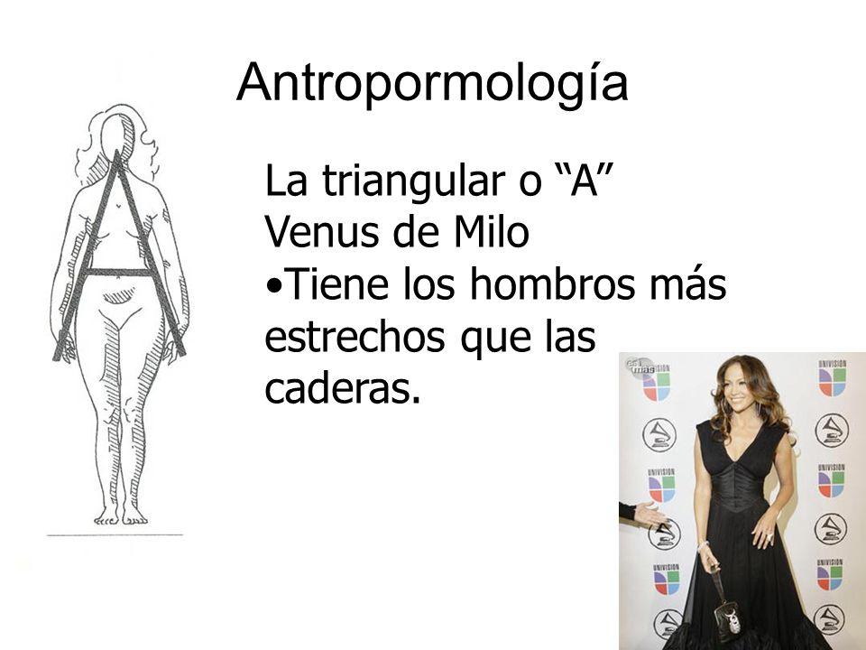 Antropormología La triangular o A Venus de Milo Tiene los hombros más estrechos que las caderas.