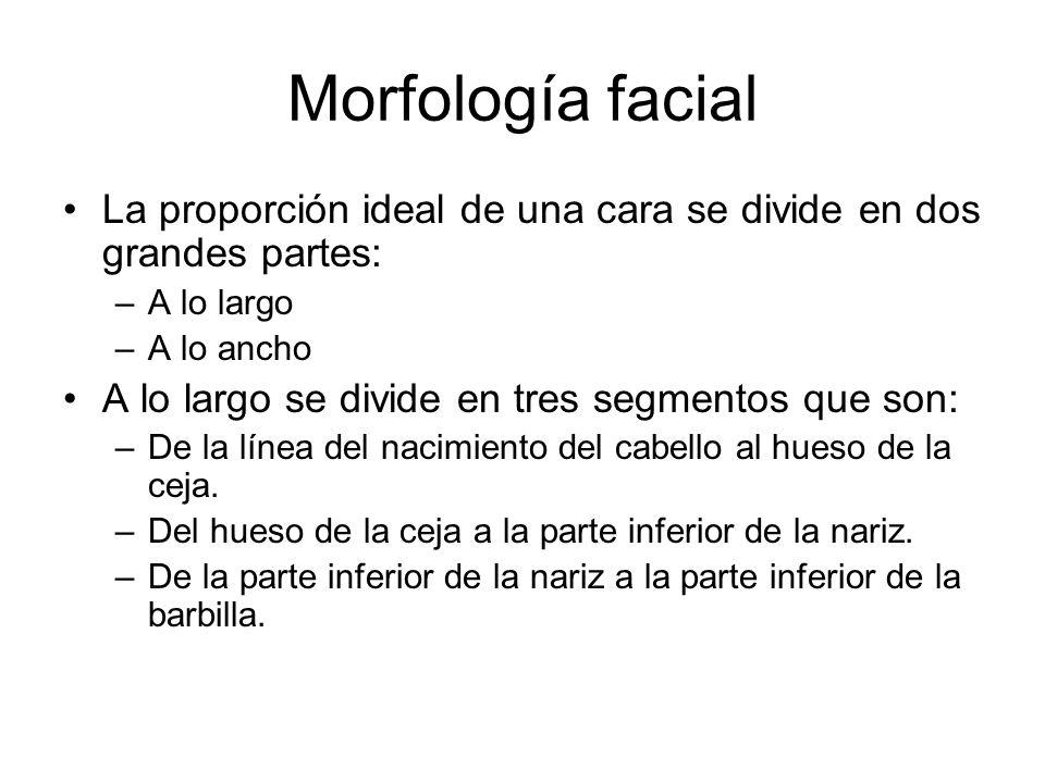 Morfología facial La proporción ideal de una cara se divide en dos grandes partes: –A lo largo –A lo ancho A lo largo se divide en tres segmentos que