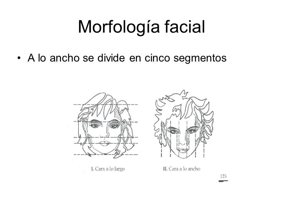Morfología facial A lo ancho se divide en cinco segmentos