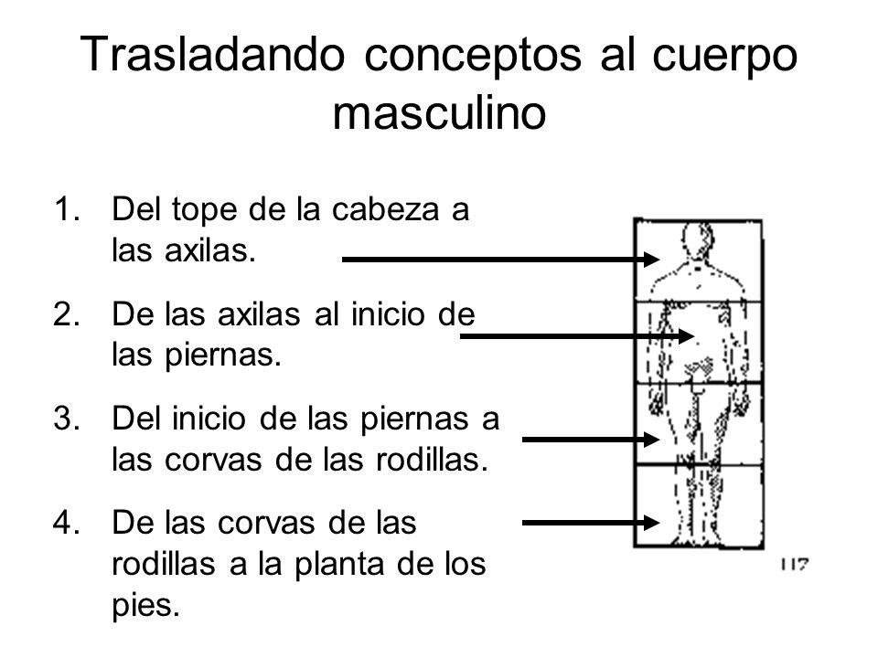 Trasladando conceptos al cuerpo masculino 1.Del tope de la cabeza a las axilas. 2.De las axilas al inicio de las piernas. 3.Del inicio de las piernas