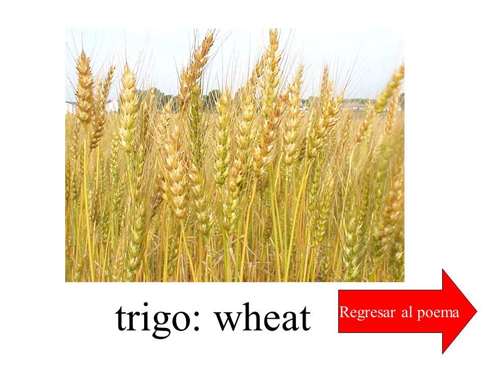 trigo: wheat Regresar al poema