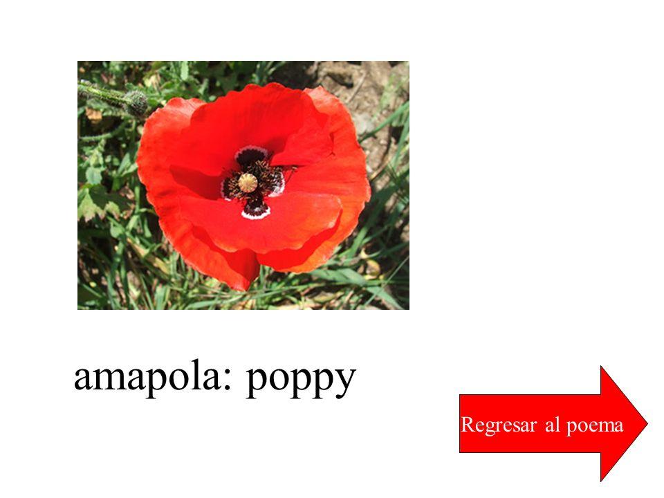 amapola: poppy Regresar al poema