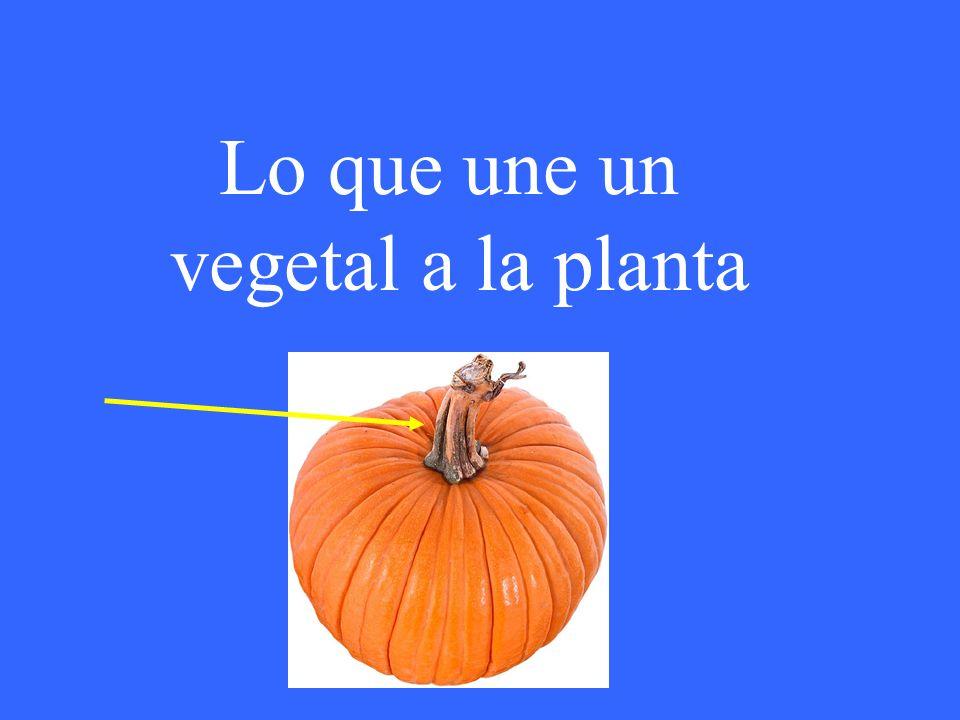 Lo que une un vegetal a la planta