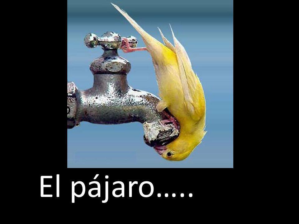 El pájaro 12 El pájaro…..