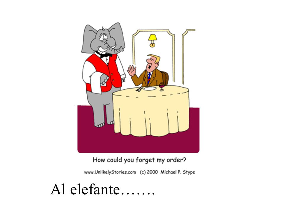 Al elefante se le olvidó la comida