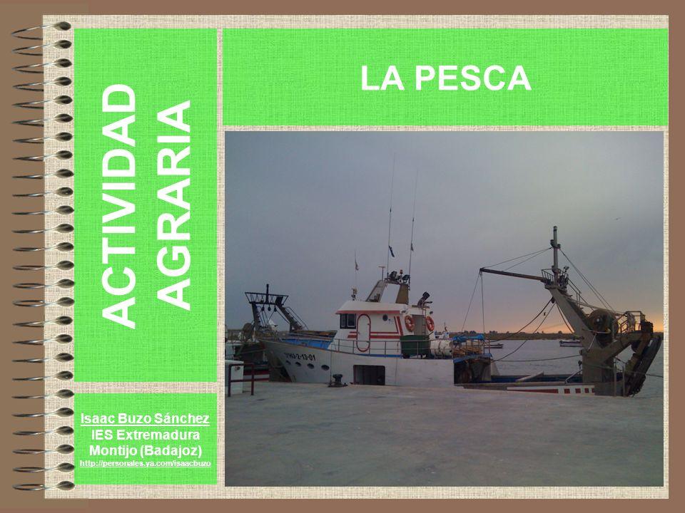 ACTIVIDAD AGRARIA Isaac Buzo Sánchez IES Extremadura Montijo (Badajoz) http://personales.ya.com/isaacbuzo LA PESCA
