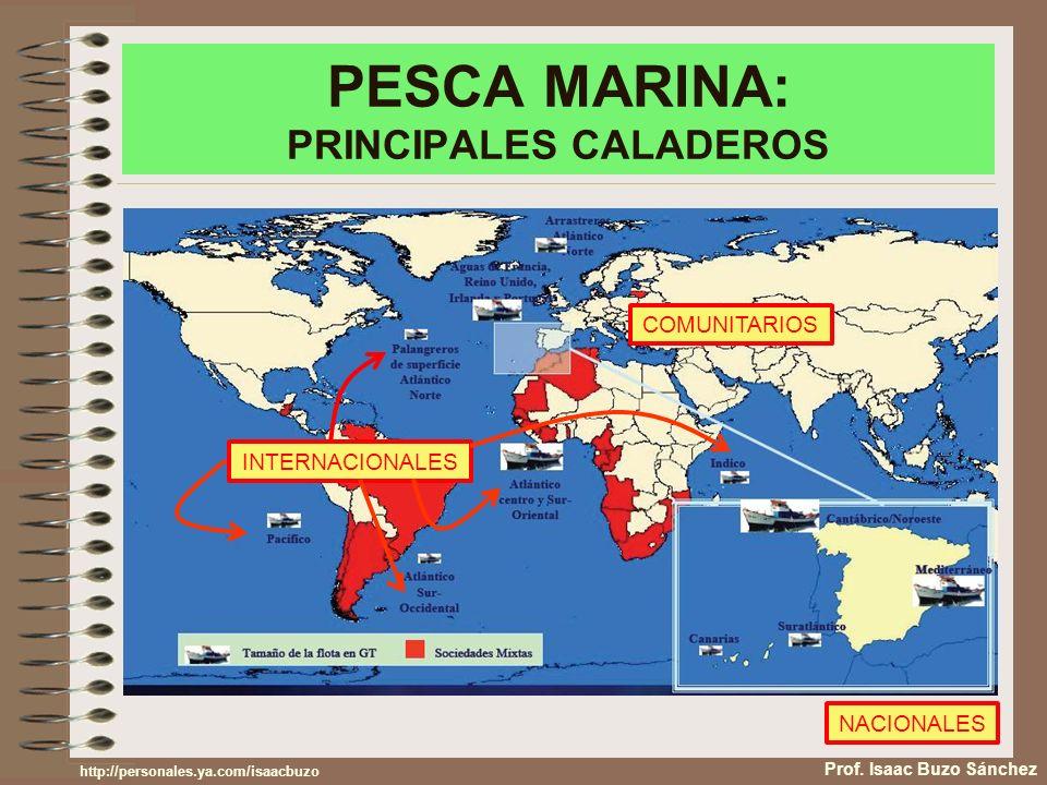PESCA MARINA: PRINCIPALES CALADEROS Prof. Isaac Buzo Sánchez NACIONALES COMUNITARIOS INTERNACIONALES http://personales.ya.com/isaacbuzo