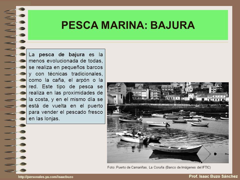 PESCA MARINA: BAJURA Prof. Isaac Buzo Sánchez La pesca de bajura es la menos evolucionada de todas, se realiza en pequeños barcos y con técnicas tradi