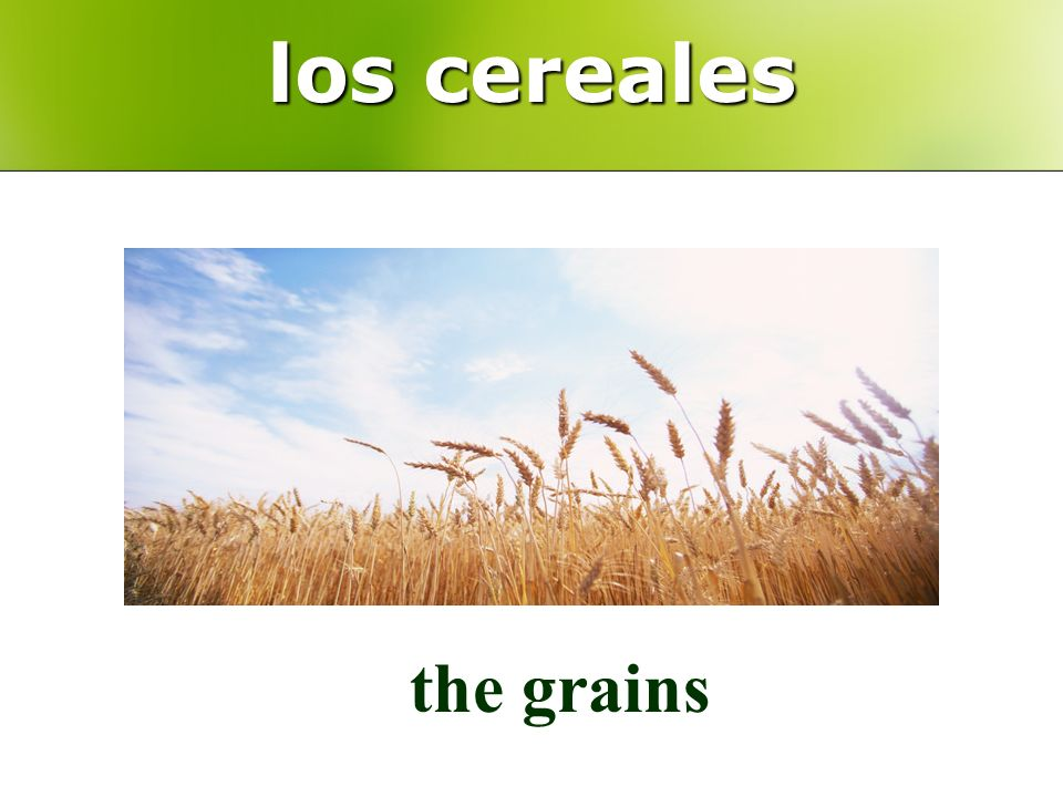 los cereales the grains