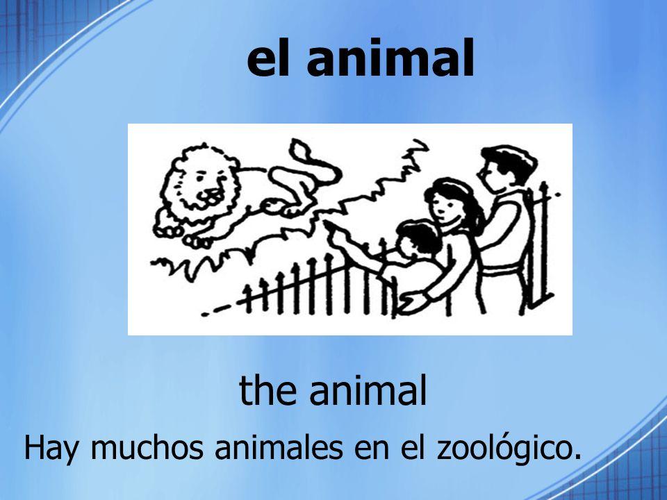 el animal the animal Hay muchos animales en el zoológico.
