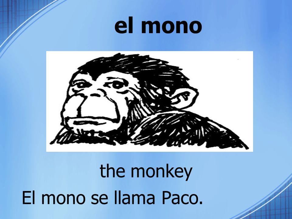 el mono the monkey El mono se llama Paco.
