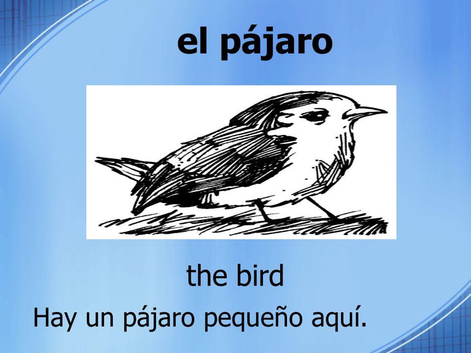 el pájaro the bird Hay un pájaro pequeño aquí.