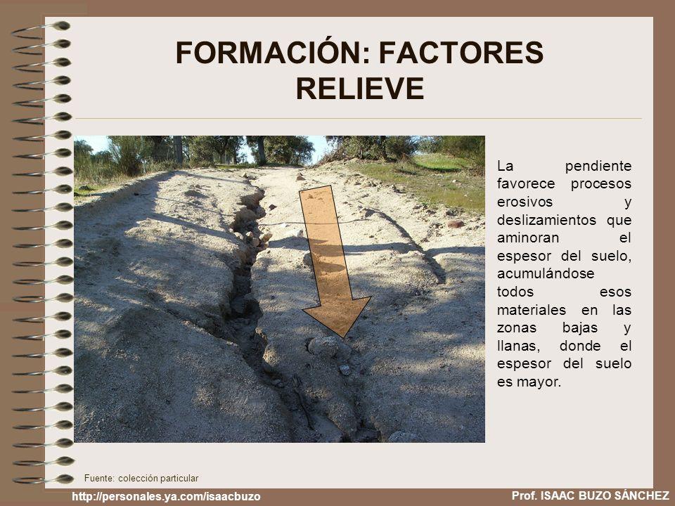 FORMACIÓN: FACTORES RELIEVE La pendiente favorece procesos erosivos y deslizamientos que aminoran el espesor del suelo, acumulándose todos esos materi