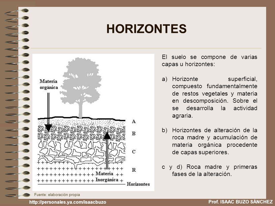 HORIZONTES El suelo se compone de varias capas u horizontes: a)Horizonte superficial, compuesto fundamentalmente de restos vegetales y materia en desc