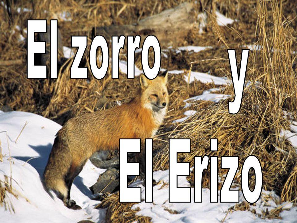 El Zorro puede hacer varias cosas, pero el Erizo hace UNA sola cosa bien.