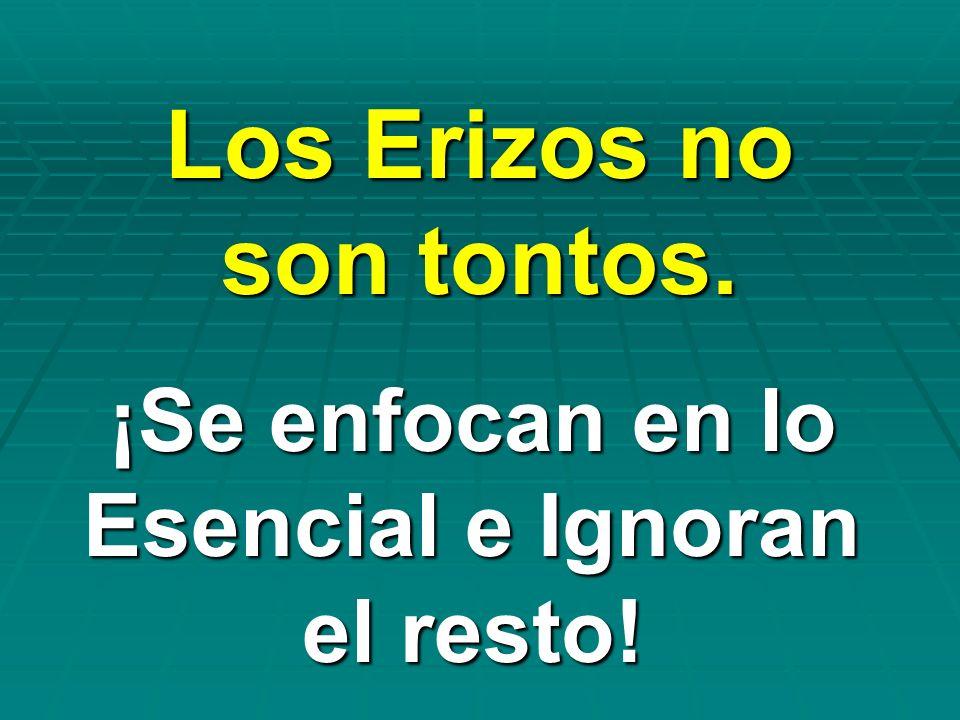 Los Erizos no son tontos. ¡Se enfocan en lo Esencial e Ignoran el resto!