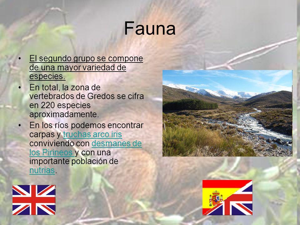 Fauna El segundo grupo se compone de una mayor variedad de especies. En total, la zona de vertebrados de Gredos se cifra en 220 especies aproximadamen