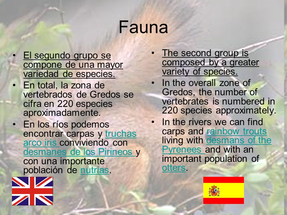 Fauna The second group is composed by a greater variety of species. In the overall zone of Gredos, the number of vertebrates is numbered in 220 specie