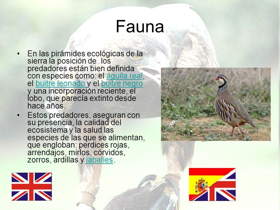 Fauna En las pirámides ecológicas de la sierra la posición de los predadores están bien definida con especies como: el águila real, el buitre leonado