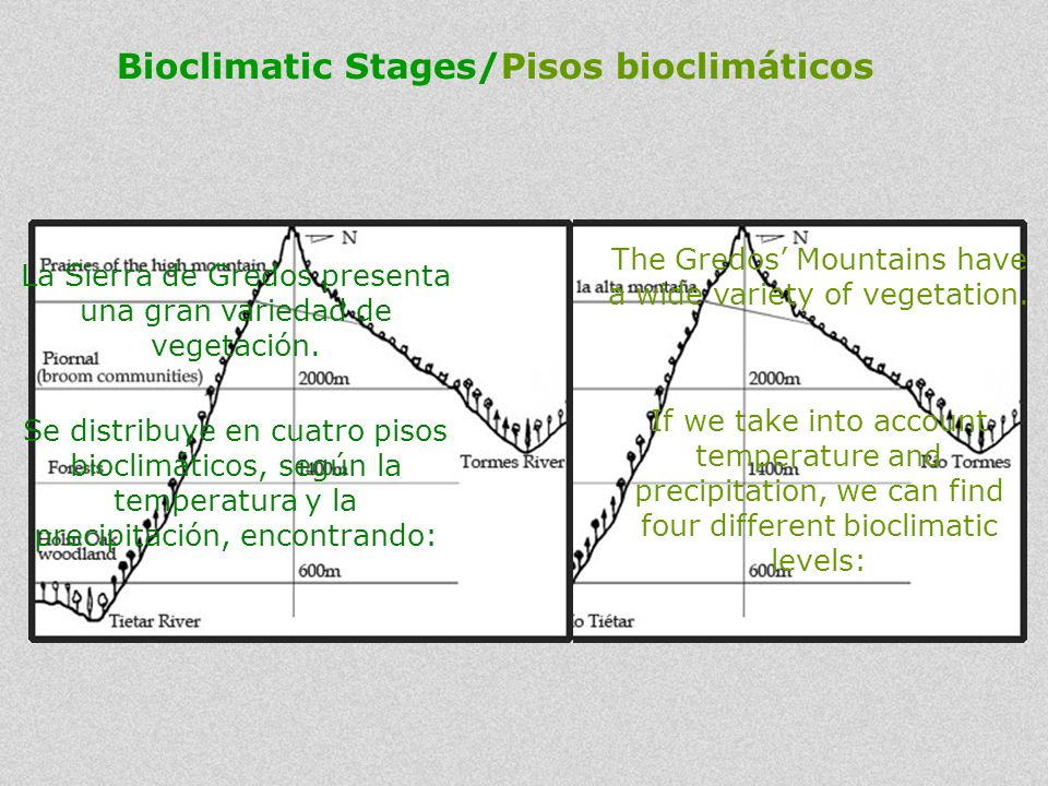 Bioclimatic Stages/Pisos bioclimáticos The Gredos Mountains have a wide variety of vegetation. If we take into account temperature and precipitation,
