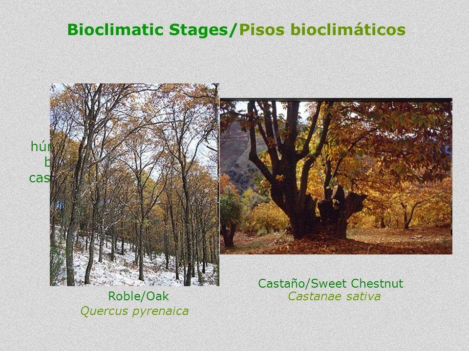 In wetter areas there are Oak Woodlands and Sweet Chestnuts (mostly cultivated). En las zonas más húmedas se encuentran bosques de robles y castaños (