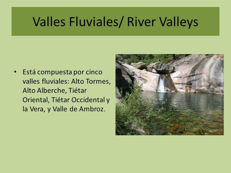La Laguna Grande Está rodeada de picos como el Almanzor, Morezón, los Hermanitos, el Casquerazo y Risco Moreno, entre otros.