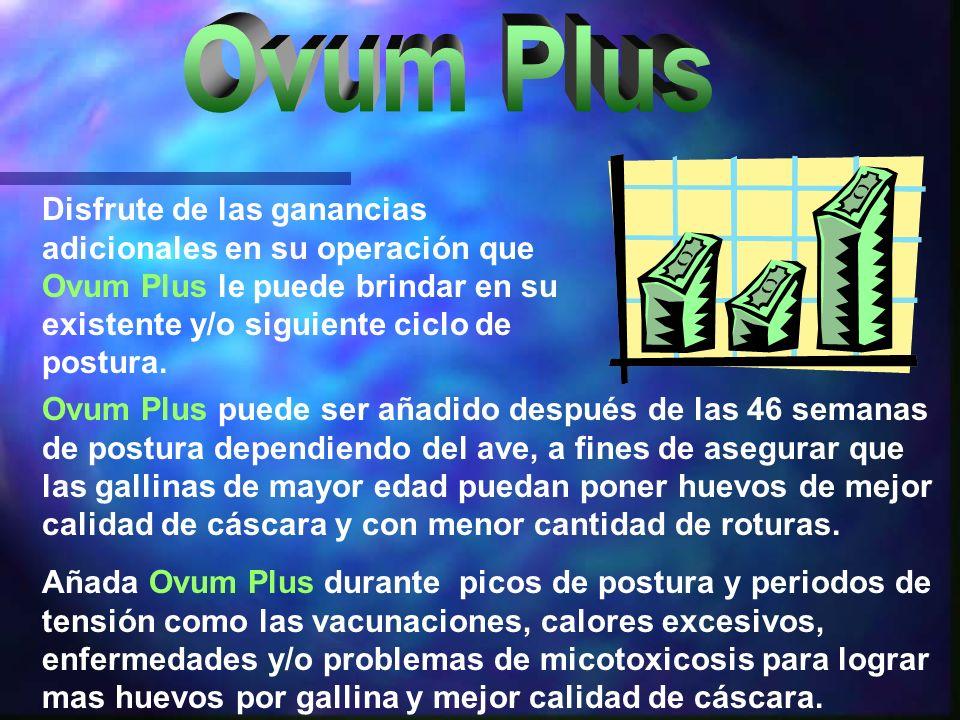 Ovum Plus puede ser añadido después de las 46 semanas de postura dependiendo del ave, a fines de asegurar que las gallinas de mayor edad puedan poner