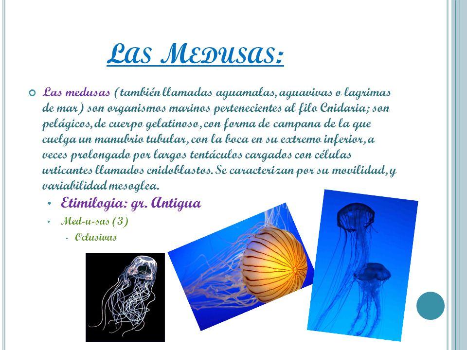 L AS M EDUSAS : Las medusas (también llamadas aguamalas, aguavivas o lagrimas de mar) son organismos marinos pertenecientes al filo Cnidaria; son pelá